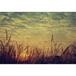 Cuadro horizontal campo de trigo